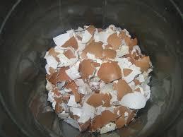 ground eggshells egg shells