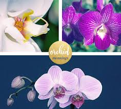 orchid flower orchid meaning and symbolism ftd