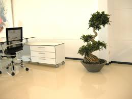 plants for offices realitrees