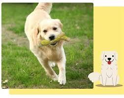 Nylon Material Sturdy Dog Toys Durable Dog Chew Toys&oneisall Bone