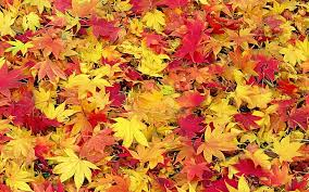 how leaves cha cha cha change colors for autumn midwestern plants