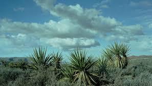 Native plants of the texas coastal plains sciencing