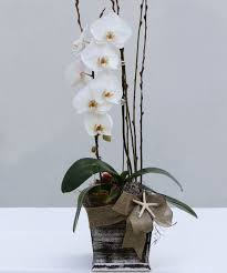 orchid delivery orchid delivery los angeles ca florist