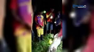 film ular phyton video warga akbar tewas ditelan ular piton youtube