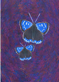 p k of 8 doctored small copper butterfly letter card notelets free