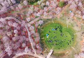 cherry blossoms stunning aerial photos captured in china time com