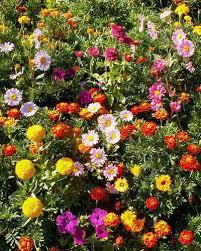 roll out flower garden sunburst border flower mix grow beautiful garden
