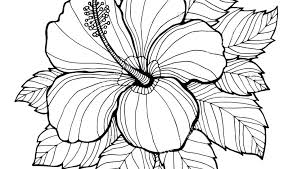 coloring pictures of hibiscus flowers flower coloring pages for adults realistic flowers coloring pages