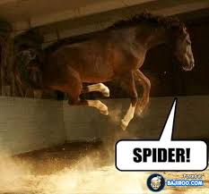Cute Spider Memes - funny horse spider pics images photos pictures bajiroo com