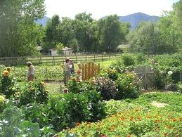 Best Garden Layout The Vegetable Garden Layout Benefits Of Creating A