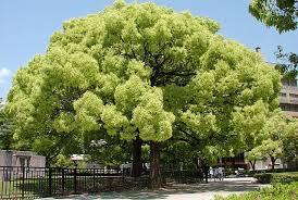 albero giardino 10 alberi da sogno kyriolexy