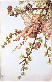 the larch fairy flower fairies