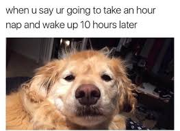 Animal Meme - cute animal memes cure the soul craveonline