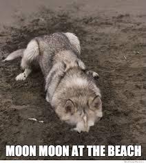 Meme Wolf - best of the moon moon meme weknowmemes
