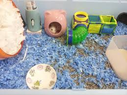 Kaytee Bedding Hamster Diary Breedercelect Product Review