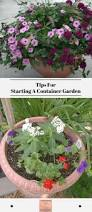 1532 best window boxes and potted plants images on pinterest