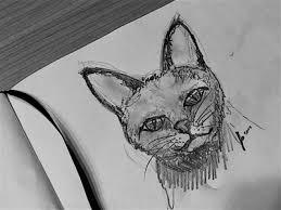 cat sketch by paul grill dribbble
