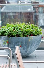 Low Bowl Planter by 330 Best Planters Images On Pinterest Plants Gardens And Modern