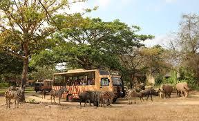 safari homepage mara river lodge