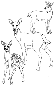 coloring pages baby deer coloring pages mycoloring free