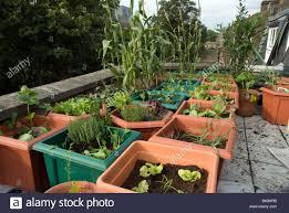 Urban Veggie Garden - vegetables and salads growing in plastic pots on rooftop urban