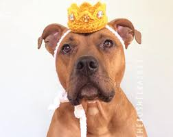 Pitbull Dog Halloween Costumes Dog Party Hat Party Hat Dogs Gotcha Hat Dog Hat