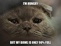 Cat Problems Meme - the humor train 12 first world cat problems via eatliver
