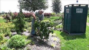 pruning tips youtube