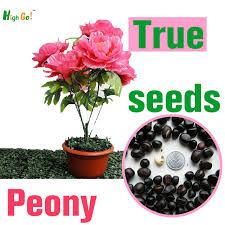 Indoor Garden Supplies - many colors rare peony flower seeds garden supplies perennial