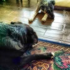 Fleas And Hardwood Floors - how raw feeders avoid bacteria in their home giveaway keep the