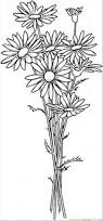 daisy coloring page daisy flower coloring pages free printable