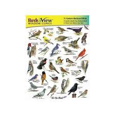 birds iview window clings backyard birds identification