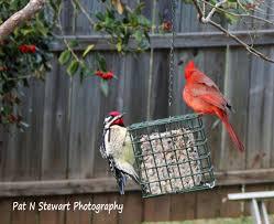 birds living with a hopeful heart