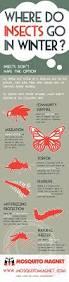 where do mosquitoes midges u0026 black flies go in winter