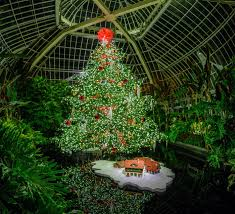 winter flower show and light garden holiday magic phipps