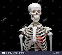 Human Anatomy Skull Bones Death Human Human Being Skull Bone Skeleton White Body