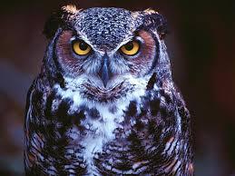 white owl 2 wallpapers eyes owl wallpaper hd wallpapers eyes owl wallpaper hand woven