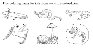 banner coloring pages amphibian and reptile coloring pages