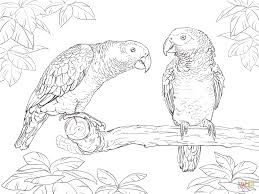 parrots coloring pages free coloring pages