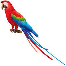 parrot png clipart best web clipart