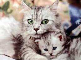 imagenes de gatitos sin frases frases sobre gatos si te gustan entra mascotas taringa