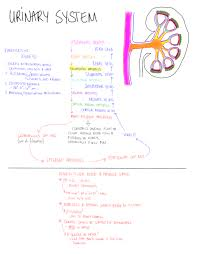 best hesi a2 study guide 2013 scientific illustration photo anatomy u0026 physiology pinterest