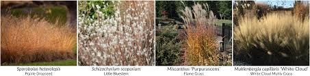 native plants of the midwest a comprehensive guide to the best charm and choices with prairie dropseed hoffman nursery