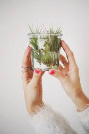 Best Indoor Plants Low Light by 222 Best As Light As Air Plants Images On Pinterest Air Plants