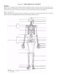 bone archives page 4 of 9 human anatomy chart