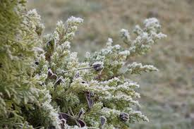 free images tree nature branch blossom winter leaf frost