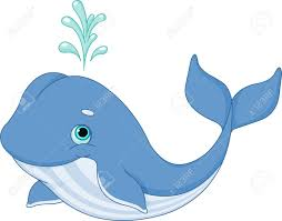 whale stock photos royalty free whale images and pictures