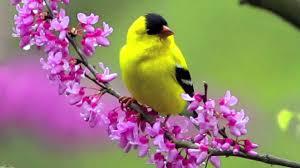 Flower And Bird - flowers and birds wallpaper wallpapersafari