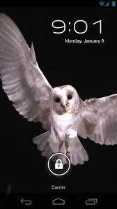 white owl 2 wallpapers barn owl flight live wallpaper android apps on google play