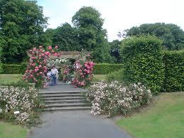 clontarf online st anne u0027s rose garden